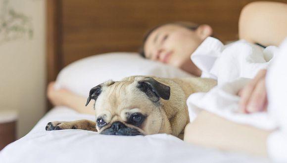 Dormir con tu perro es mejor que hacerlo al lado de cualquier persona