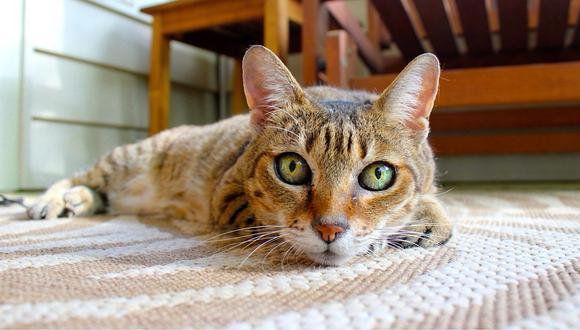 Rusia: pide ayuda por la salud su gato y lo encuentran muerto junto a este