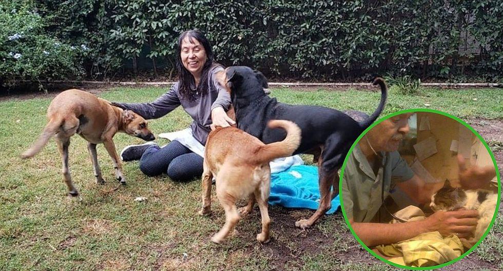 Veterinarios son ejemplo al atender gratis a perros y gatos de la calle