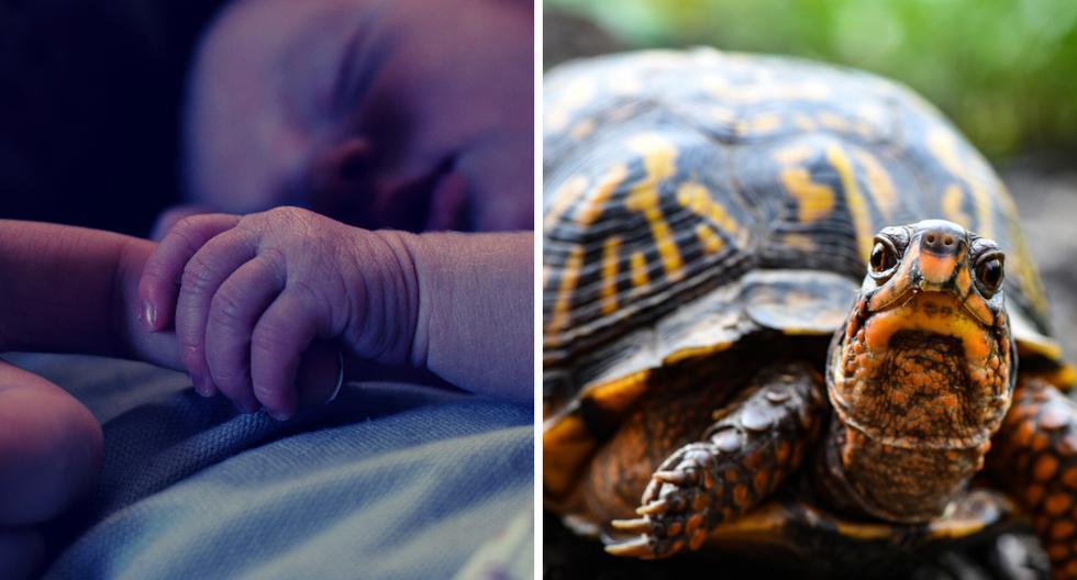 Bebé muere tras ingerir sangre de tortuga que le dieron para 'evitar' contraer el coronavirus | FOTO: COMPOSICIÓN