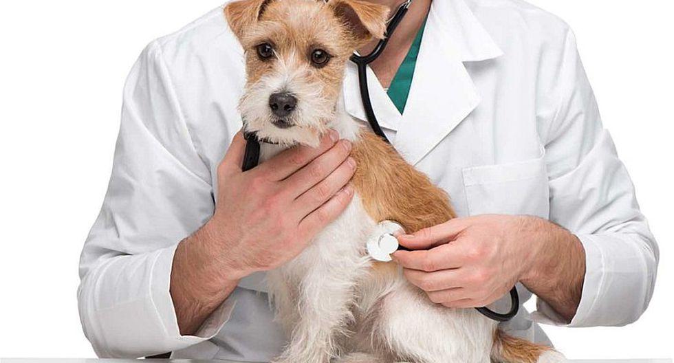 Todo lo que debes saber sobre el primer hospital de mascotas