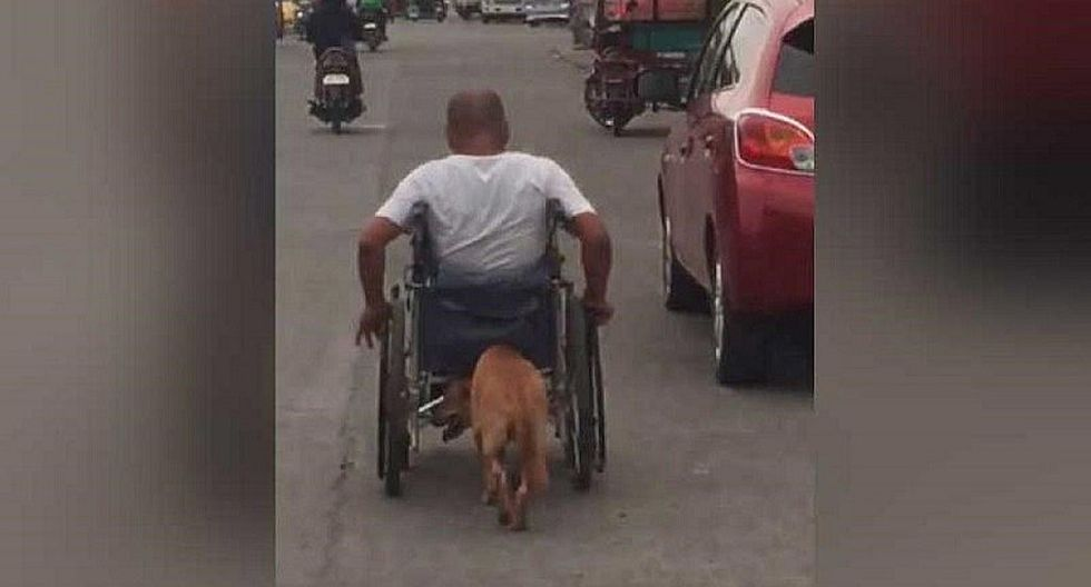 Perrito empuja silla de ruedas de sus dueño y video enternece en redes (VIDEO)