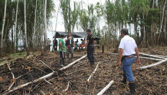 """La organización indígena expresó su profunda preocupación frente a la extracción ilegal de madera """"topa o palo balsa"""", entre otras especies. (Foto referencial)"""