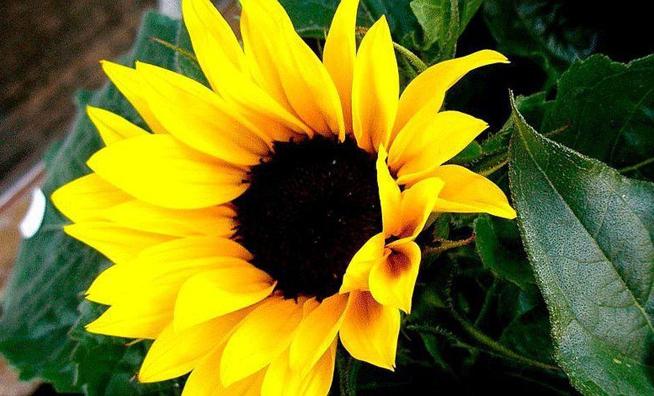 ¡Todo un misterio! Las mejores flores para atraer la suerte