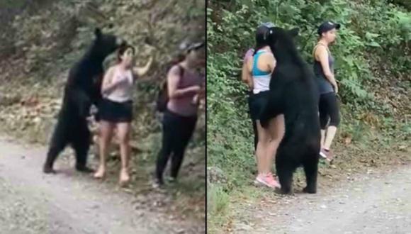Animal era amistoso y hasta parece abrazar a mujer.