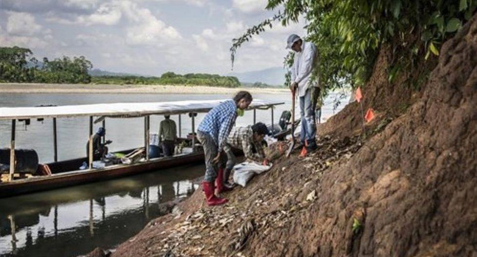 Científicos descubren en Perú restos del mono fósil más pequeño del mundo
