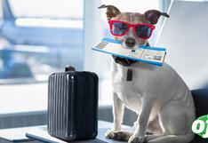¿Quiere viajar con su mascota?: Sepa cómo hacerlo de manera segura