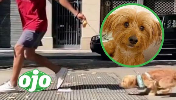 El atlético perro del video viral de Instagram se llama Wolfie y vive en España.  | Crédito: @world.of.wolfie / @barked / Instagram