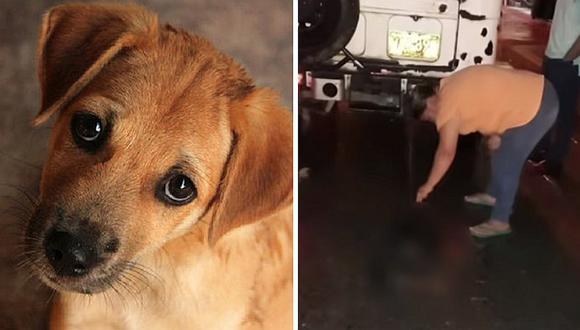 Maltrato animal: profesor amarra a su perro a auto en movimiento y lo mata (VIDEO)