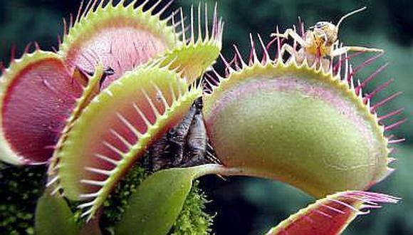 Plantas carnívoras viven bajo amenaza por destrucción de su hábitat