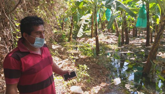 Sullana: plantaciones de plátano están inundadas desde hace cinco días.