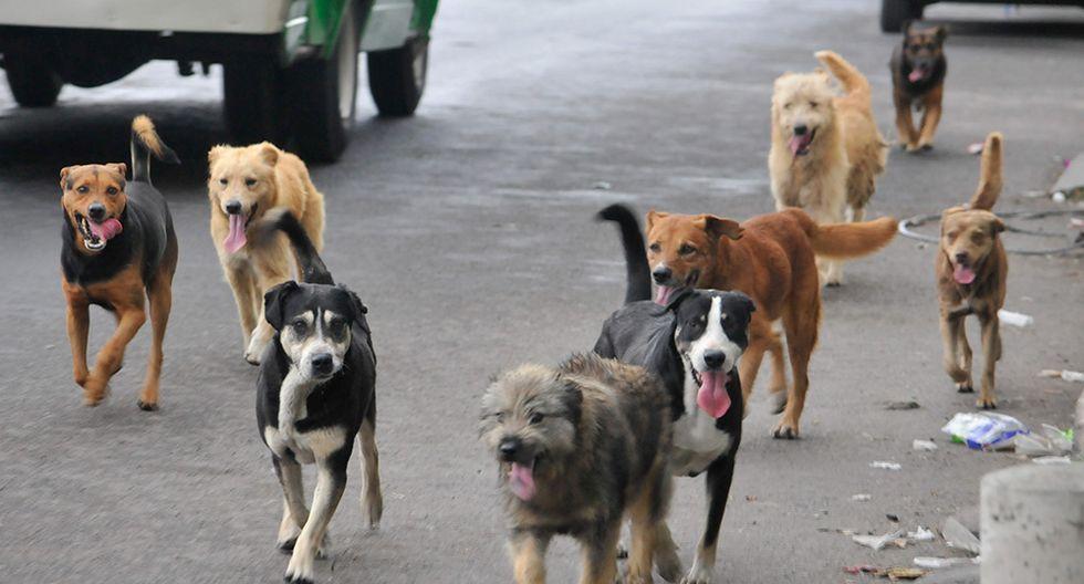 Impulsan una campaña contra la matanza de pobres perros vagabundos