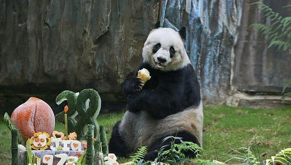 Zoológico invita a votar en internet por nombre de un panda bebé