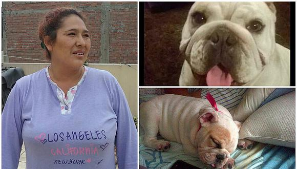 """¡Malditos! """"Robacasas"""" matan a cachorra bulldog para robar en vivienda de Santa Anita (VIDEO)"""