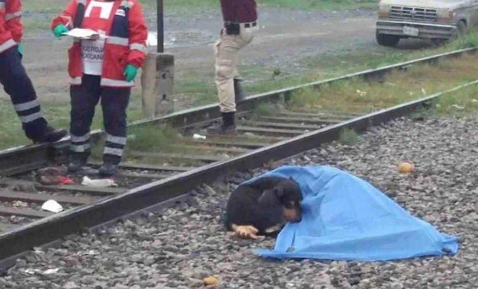 Perrito conmueve al cuidar el cadáver de su dueño tras atropello (FOTOS)