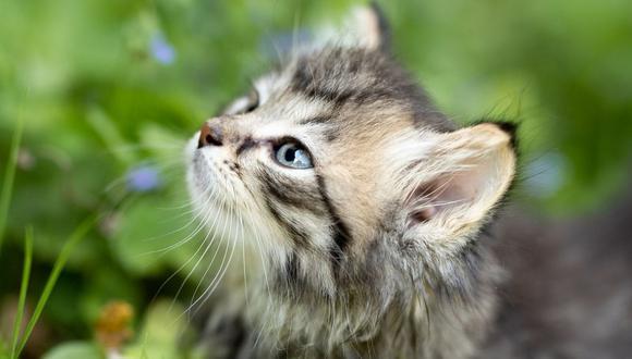 El animal vio concedidos sus deseos de una forma inmediata. (Foto referencial - Pixabay)