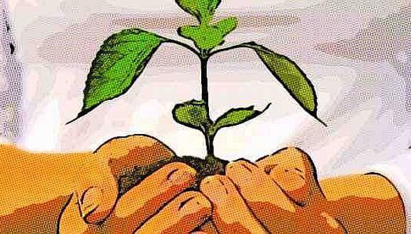 La reproducción asexual de las plantas