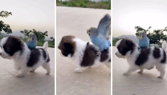 El video de las mascotas se encuentra en TikTok desde fines de mayo. (Foto: @cutepetowner   TikTok)