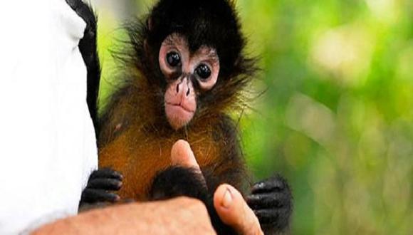 Costa Rica cerrará sus zoológicos y liberará a los animales que estaban dentro