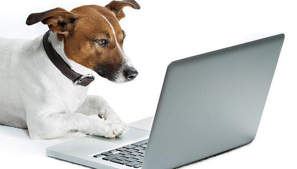 Facebook prohíbe la venta de mascotas en su plataforma