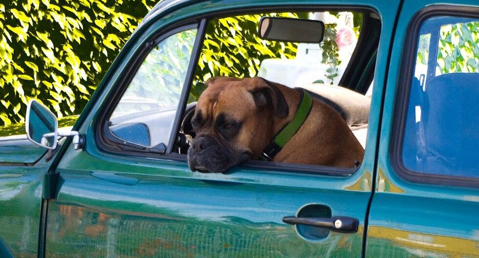 El propietario de la mascota confesó ante las autoridades que quería enseñarle a conducir al perro pero aún así fue detenido y acusado de múltiples delitos. (Foto: Pixabay/Referencial)