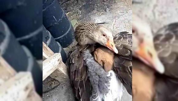 Pato abraza a cachorro para evitar que muera de frío en Estados Unidos
