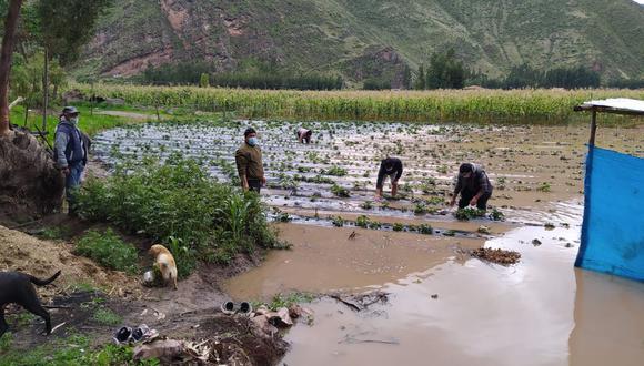 Varias hectáreas de cultivos de maíz y fresas quedaron inundadas por el desborde del río Vilcanota. La agricultura es la única fuente de ingresos de los habitantes del sector (Foto: Juan Sequeiros)