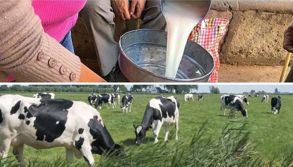 Conocida marca de leche dejará de comprarle insumo a más de 5 mil ganaderos de Arequipa