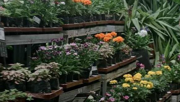 Jardinería: pasos claves para abonar las plantas