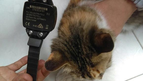 Mujer es detenida al quitarse brazalete electrónico y ponérselo a su gato