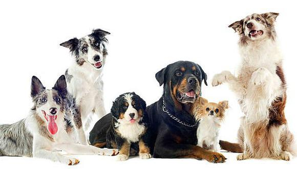 Día del Perro: 4 novedades para engreír a tu mejor amigo