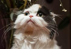 Una gata sorprende a todos en las redes al defender a su cría de unos perros callejeros