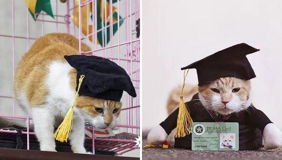 Universidad realiza ceremonia de graduación para su gato (FOTOS Y VIDEOS)