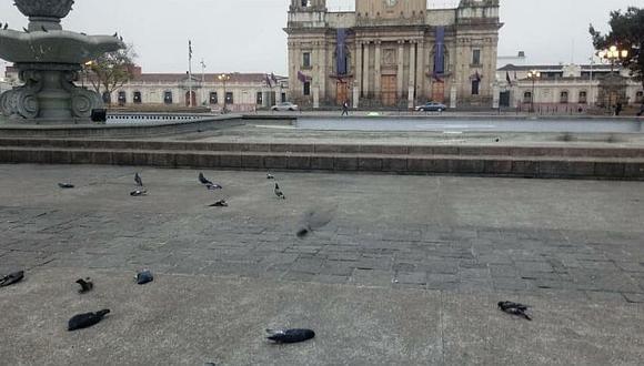 Hallan muertas a 100 palomas y aves que habrían sido envenenadas