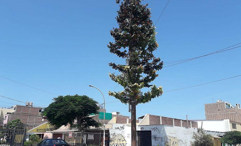 Hay dos antenas de telefonía disfrazadas de árboles en el Cercado de Lima