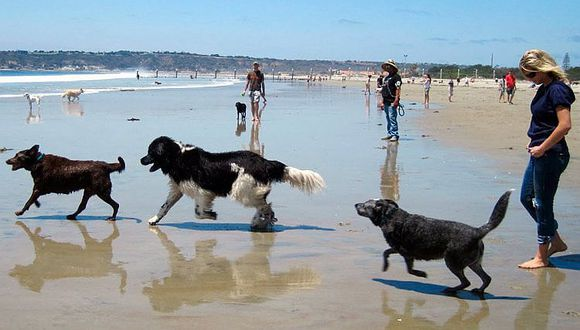 Portugal: Perritos ya tienen playa para jugar y bañarse