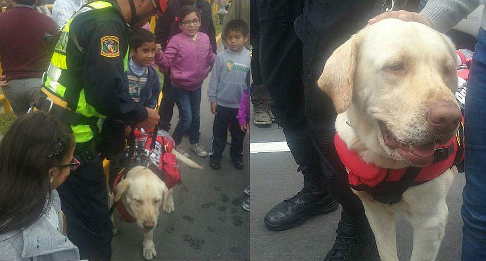 Parada Militar: Rocky, el valiente perro de la Policía de Carreteras [VIDEO]