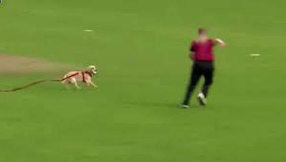 Las jugadoras pudieron recuperar la pelota después de perseguir al canino.