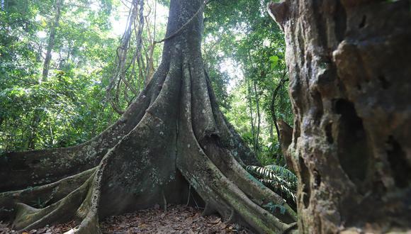 """""""Es una satisfacción entregar hoy el sello Safe Travels al Manu y a Tambopata, dos de los destinos turísticos más visitados en Madre de Dios"""", expresó Claudia Cornejo. (Foto: Mincetur)"""