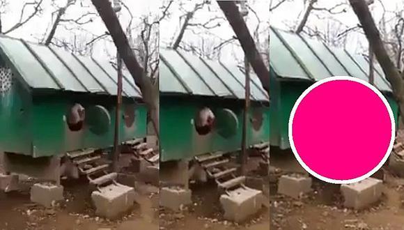 YouTube: creyeron que del corral saldría un pollito, pero apareció pollo gigante (VIDEO)