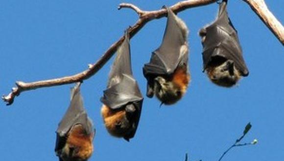 Ecuador: 12 muertes por un brote de rabia por mordidas de murciélagos
