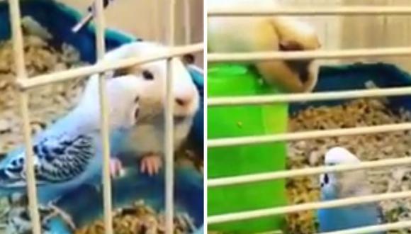 Varios usuarios indicaron que las mascotas se habrían criado juntas. (Foto: RM Videos | YouTube)