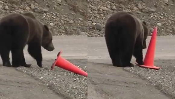 Un video viral muestra cómo un oso demuestra su civismo al levantar un cono derribado a un lado del camino. | Crédito: RM Videos / YouTube.