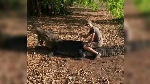 The young man rides on a crocodile