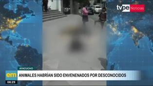 Ayacucho: Hallan en vía pública más de 20 perros muertos por envenenamiento