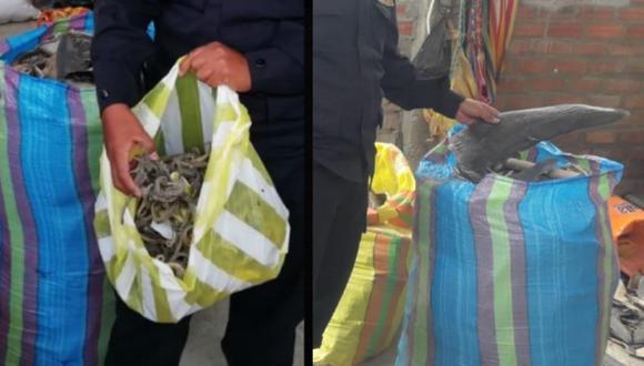 Piura: Allanan inmueble con más de dos toneladas en aletas de tiburón y caballitos de mar (Foto: PNP)