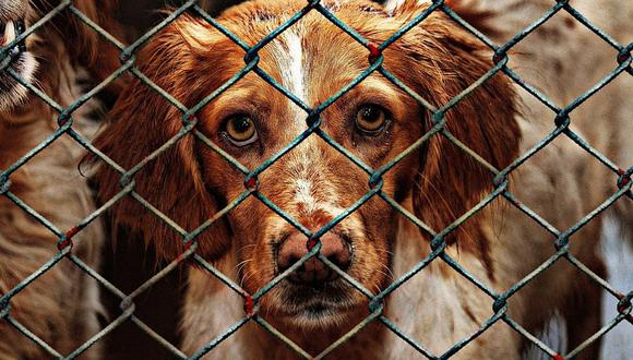 """""""Patatón 2019"""", la oportunidad para ayudar a perros y gatos abandonados"""