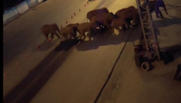 Los elefantes atraviesan una pista en una zona poblada.