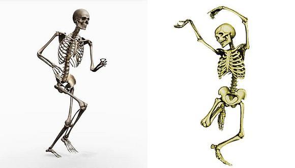 ¿Cuántos huesos tiene el sistema óseo?