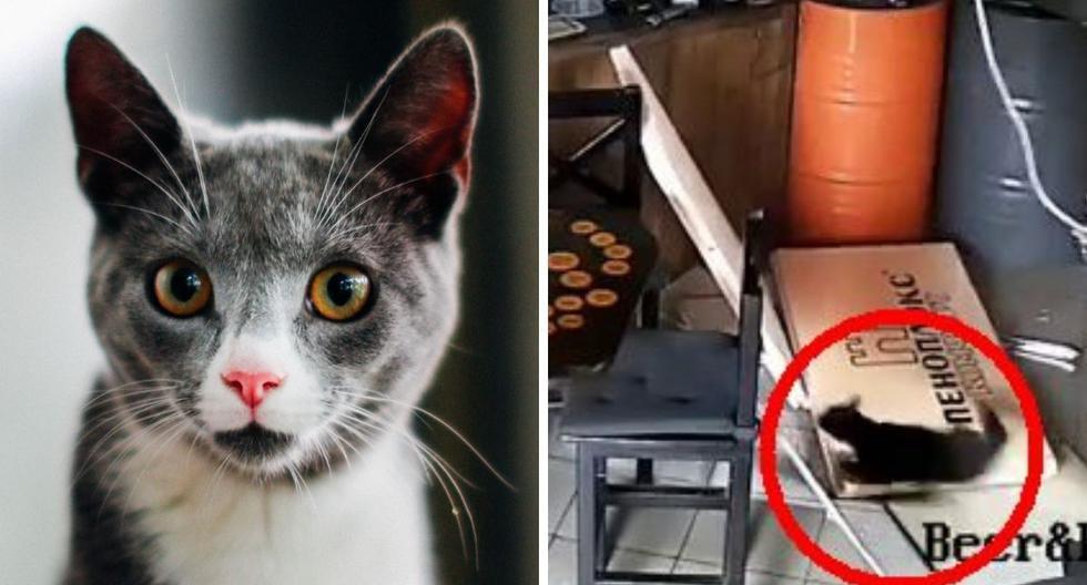 La grabación muestra al felino cayendo del techo del establecimiento, ubicado en Rusia. (Foto: Pexels | @beerbeerkrasnodar | Instagram)